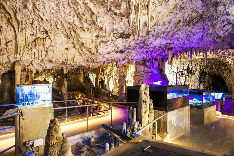 postojna-cave-exploration-slovenia-tour-travel