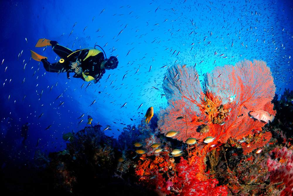 red-precious-coral-diving-cultivation-naples