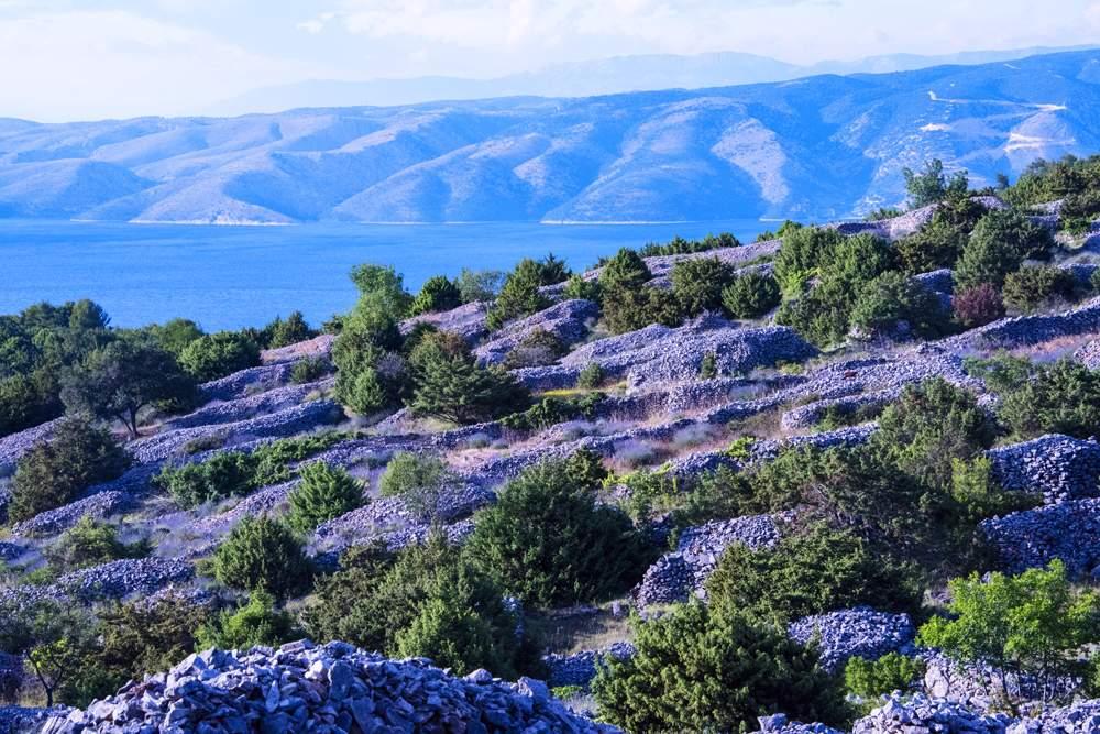hvar-croatia-lavender-fields