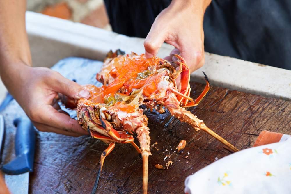 mljet-lobster