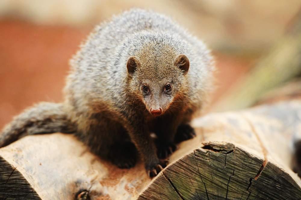 mongoose-mljet