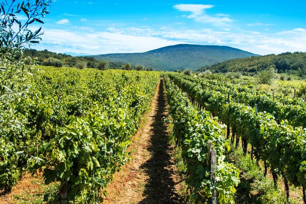 zlahtina-vrbnik-wine-krk