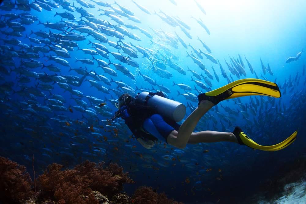 diving-mljet-island-adriatic