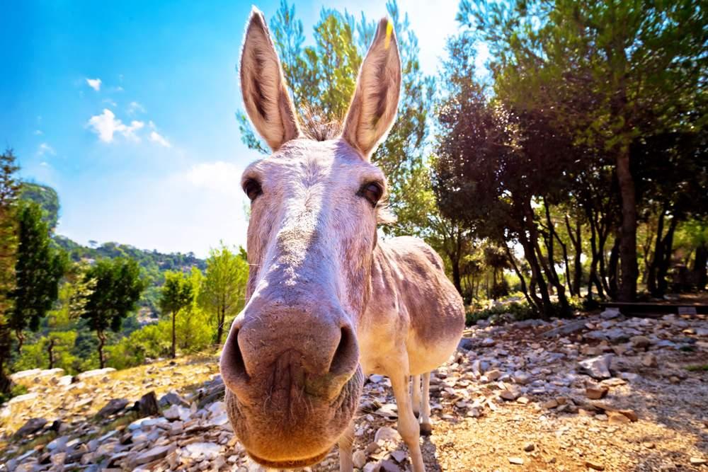 donkey-ride-korcula