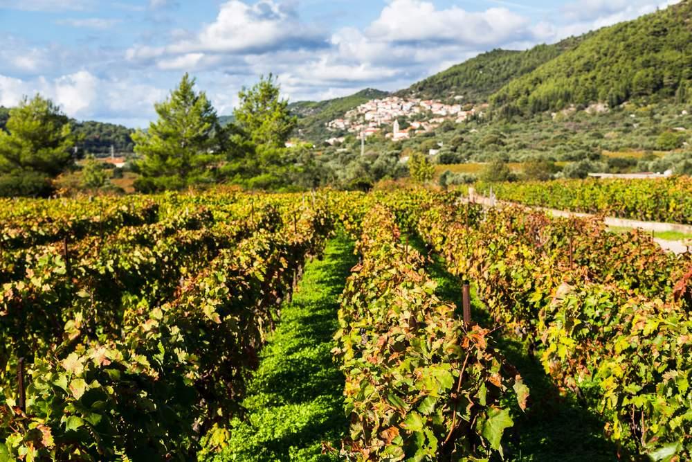 vineyards-smokvica-korcula